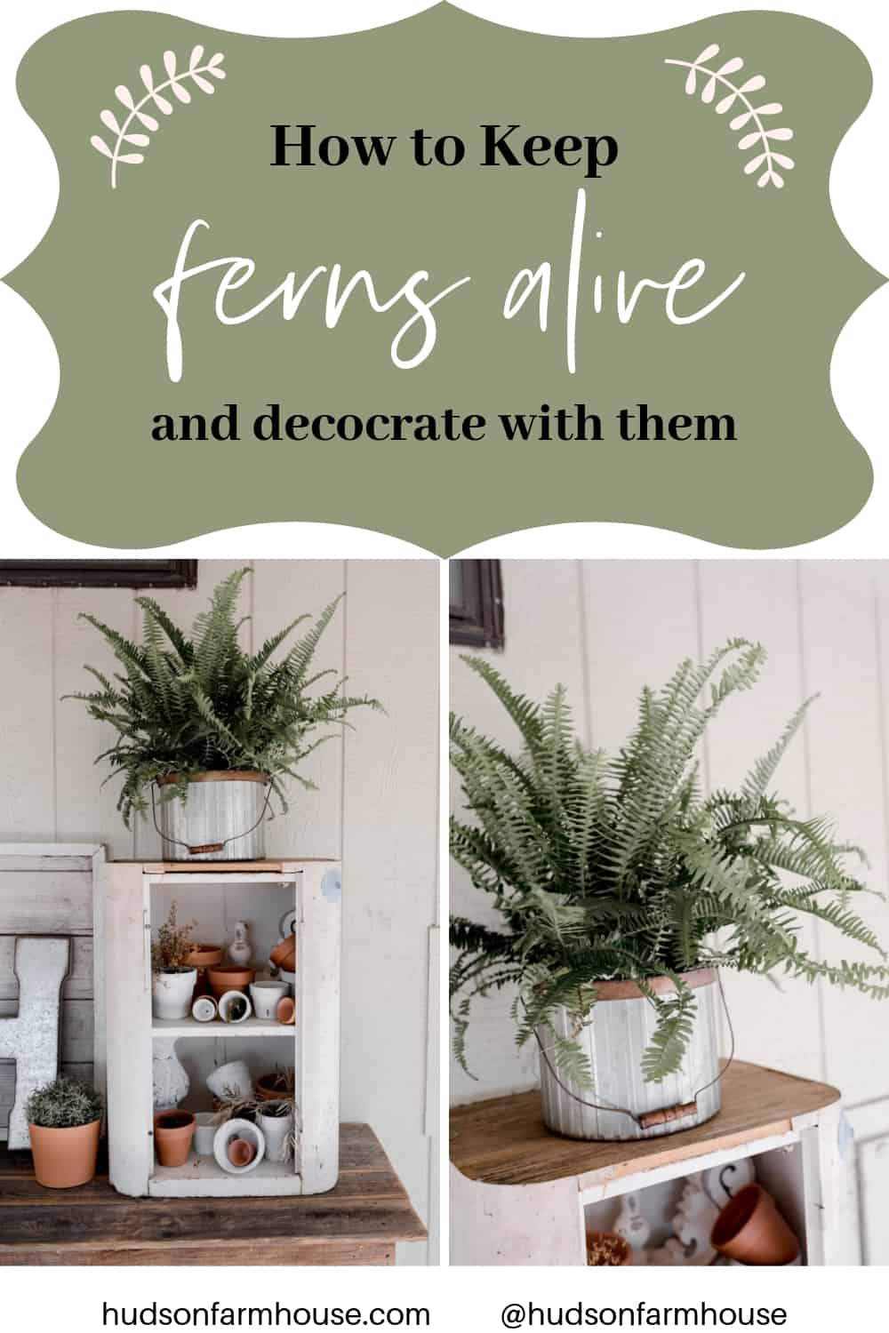 How to keep  fern alive. plnt decor ideas. plant decor bedroom plant decor indoor plant decor living room plant decor ikea plant decor outdoor plant decor diy plant decor apartment boho plant decor plant decor bathroom plant decor kitchen plant decor ideas plant decor wall farmhouse plant decor minimalist plant decor hanging plant decor fake plant decor modern plant decor plant decor office plant decor dorm faux plant decor house plant decor air plant decor pothos plant decor plant decor patio rustic plant decor snake plant decor